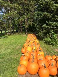 Pumpkin Patch Indiana County Pa by Nancy U0027s Pumpkin Patch At Brush Valley Acres Home Facebook
