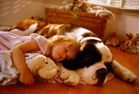 Best Type Of Flooring For Dogs by Dog Breed Pictures The Right Dog For You U0026 Your Health