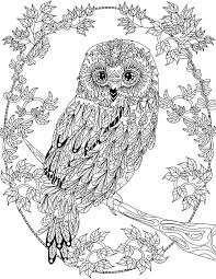 OWL Coloring Pages For Adults Free Detailed Owl