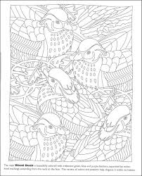 Hidden Feathers Coloring Book