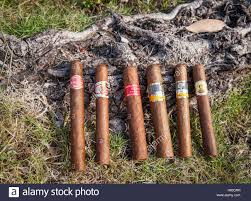 6 Handmade Cuban Havana Cigars Of Different Makes And From Cigar Factories Displayed On The