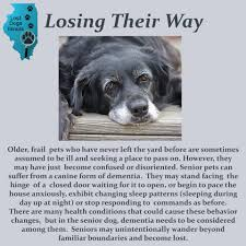 No Shed Dogs Illinois by Lost Dogs Lost Dogs Illinois