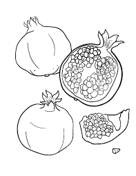 Printable Pomegranate Coloring Page Free PDF Download At Coloringcafe