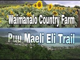 Waimanalo Pumpkin Patch Oahu by Puu Maeli Eli Trail I Waimanalo Country Farm I Romy U0027s Kahuku