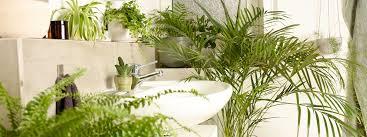 die besten pflanzen fürs badezimmer und wie du sie richtig
