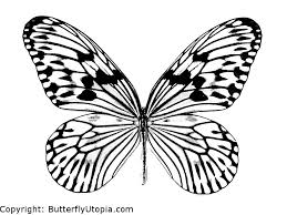 Butterfly Coloring Page Picture