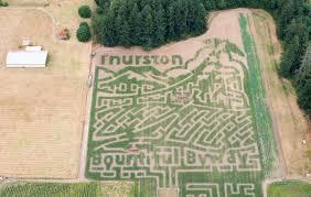 Pumpkin Patch Near Tacoma Washington by Rutledge Corn Maze Wows Visitors With Unique Design South Sound