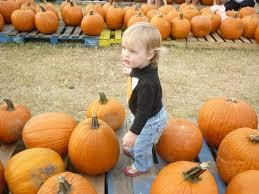 Atlanta Pumpkin Patch Corn Maze by Pumpkin Patches And Corn Mazes Offer Fall Fun