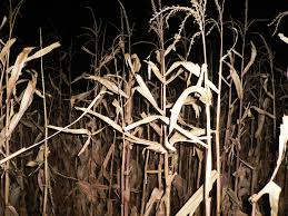Pumpkin Patch Near Killeen Tx by Texas Haunted Mazes U0026 Corn Mazes