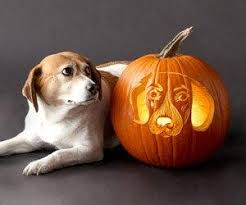 Boston Terrier Pumpkin Pattern 10 astonishing dog pumpkin carvings u2013 iheartdogs com