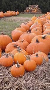Pumpkin Patch Columbus 2015 by Summerville Umc Pumpkin Patch Muscogee Moms