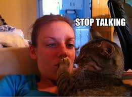 cat stop stop talking cat pictures