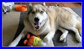 Pumpkin Causes Dog Diarrhea by Can Dogs Eat Raw Pumpkin Fan Friday 227 Youtube