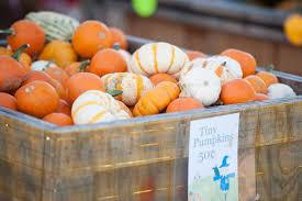 Pumpkin Patch Near Lincoln Il by Bose Family Farm