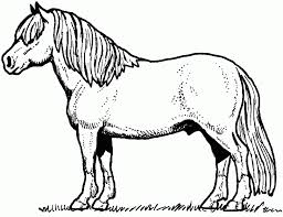 Special Coloring Pages Horses Cool De Unknown Design Gallery Ideas Printable For Adults Animal