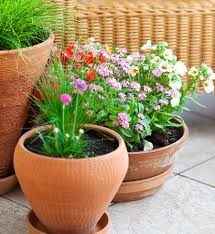 Beautiful Container Gardening Ideas - Inspired Home+Life Modern Garden Plants Uk Archives Modern Garden 51 Front Yard And Backyard Landscaping Ideas Designs Best 25 Vegetable Gardens Ideas On Pinterest Vegetable Stunning Way To Add Tropical Colors Your Outdoor Landscaping Raised Beds In Phoenix Arizona Youtube Kids Gardening Tips Projects At Home Side Yard 55 Youll Fall Love With 40 Small 821 Best Images Plants My Backyard Outdoor Fniture Design How Grow A Lot Of Food 9 Ez Tips