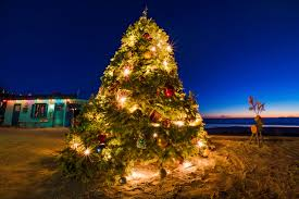 Silver Tip Christmas Tree Los Angeles by Merry Christmas From Crystal Cove Travel Caffeine