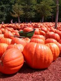 Pumpkin Patch Nashville Area by Best Pumpkin Patches Corn Mazes U0026 Hayrides In Nashville