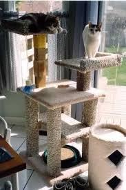 best 25 kitty condo ideas on pinterest cat condo condo