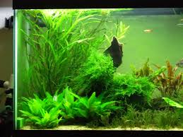 Help Aquascaping A 55G Tank | AquaScaping World Forum The Green Machine Aquascaping Shop Aquarium Plants Supplies Photo Collection Aquascape 219 Wallpaper F Amp 252r Of The Month October 2009 Little Hill Wallpapers Aquarium Beautify Your Home With Unique Designs Design Layout New Suitable Plants Aquariums Pinterest Pics Truly Inspired Kinds Ornamental Aquascaping Martino Agostini Timelapse Larbre En Mousse Hd Youtube Beauty Of Inside Water Garden Inspirationseekcom Grass Flowers Beautiful Background