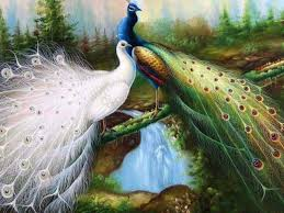 Best Peacock Painting Wallpapers HD