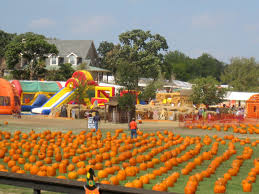 Flower Mound Pumpkin Patch Christmas Tree by 100 Flower Mound Tx Pumpkin Patch Your Home Free Team