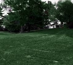 Grass: Scenic Touch Forest Monochrome Woods Green Trees Summertime ... Garden Design With Backyard Landscaping Trees Backyard Fruit Trees In New Orleans Summer Green Thumb Images With Pnic Park Area Woods Table Stock Photo 32 Brilliant Tree Ideas Landscaping Waterfall Pond Stock Photo For The Ipirations Shejunks Backyards Terrific 31 Good Evergreen Splendid Grass Scenic Touch Forest Monochrome Sumrtime Decorating Bird Bath Fountain And Lattice Large And Beautiful Photos To Select Best For