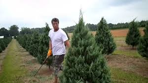 trimming christmas trees shawn powers and greg powers youtube