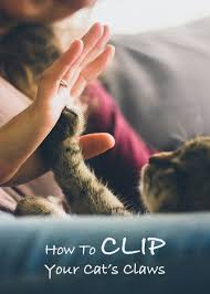 how to cut a cats nails choosing and using cat nail clippers a complete guide from the