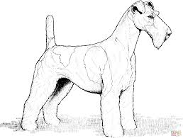 Click The Wire Fox Terrier Coloring Pages To View Printable