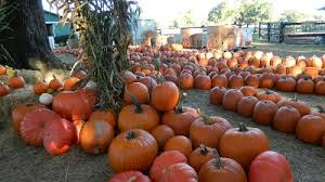 Pumpkin Patches In Colorado Springs 2014 by East Central Florida Pumpkin Patches Corn Mazes Hayrides And
