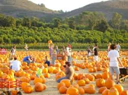 Best Pumpkin Farms In Maryland by Best Pumpkin Patches In Southern California 97 1 Amp Radio
