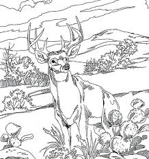 Full Image For Forest Animal Coloring Pages Adults Find This Pin And More On Color