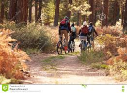 Group Of Friends Riding Bikes On A Forest Trail Back View Stock