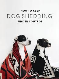Do All Dogs Shed Fur by Best 25 Dog Shedding Remedies Ideas On Pinterest Dog Shedding