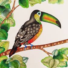 Incredible Inspiration Toucan Animal Coloring Pages From The Millie Marotta Kingdom Colouring Book Instagram
