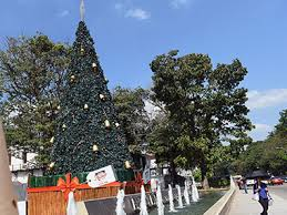 A Sri Lankan Woman Walks Past Decorated Christmas Tree In Colombo AFP