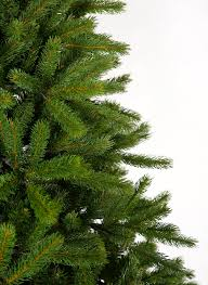 Silvertip Fir Christmas Tree by King Fraser Fir Quick Shape Christmas Tree King Of Christmas