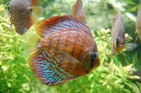 aquarium tropical du palais de la porte dorée evous