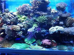 tests impératifs en eau de mer aquascaping et aquariophilie