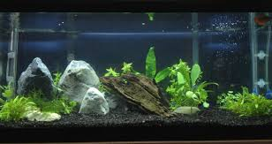 Newbie's 20g Long Aquascape - The Planted Tank Forum Aquascaping Fish Tank Projects Aquadesign George Farmers Live Aquascaping Event At Crowders Ipirations Mzanita Driftwood For Inspiring Futuristic Home Planted Riddim By Alejandro Menes Aquarium Design Contest Ada Horn Wood Beautiful Natural Hardscape For Superwens 2012 Aquascape Petrified Youtube Fish Aquariums The Worlds Best Planted Aquarium Products Designs Reviews Out Of Ideas How To Draw Inspiration From Others Aquascapes 7 Wood Images On Pinterest Sculpture Lab Tutorial Nano Cube Size 20 X 25h