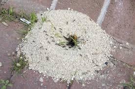 Flying Ants In Bathroom Window by Ant Control U0026 Treatments In Atlanta Ga Ant Repellent Sprays