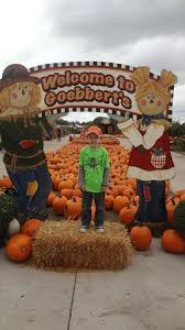 Goebbert Pumpkin Patch In Barrington Il by The Giant Rocking Chair Picture Of Goebbert U0027s Pumpkin Farm