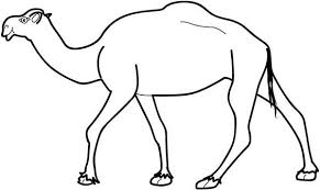 Camel Picture Of Coloring Page