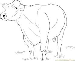 Jersey Dairy Cattle Coloring Page