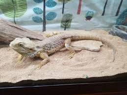Alcon Precision Device Facility Sinking Spring Pa by 28 Bearded Dragon Heat Lamp Timer Zoo Med Zoo Med Desert
