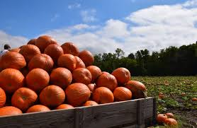 Southeast Wisconsin Pumpkin Patches by Pumpkin Blowout From The Pumpkin Patch To You Blog Festival Foods