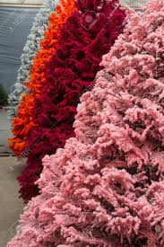 Pink Christmas Tree Flocking Spray by Shot Of Colored Christmas Trees Flocked In Different Colors