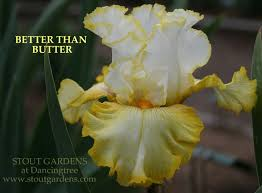 8 best iris images on bearded iris irise and irises