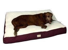 Kirkland Dog Beds by Cozy Dog Beds Canada Costco Dog Beds Canada Costco Kirkland Dog